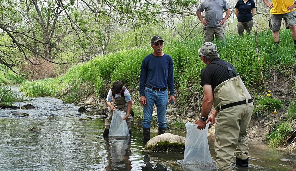 Brook Trout Release